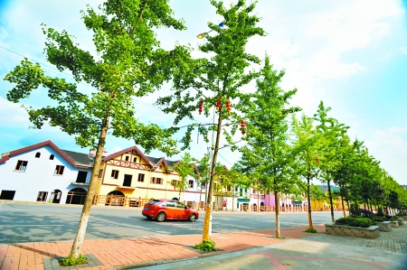比较多,建议作为景观树的银杏最好选用雄株.   叶子枯黄